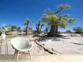 beautiful baobabs