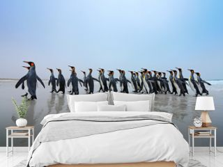 Group of King penguins, Aptenodytes patagonicus, going from white sand to sea, artic animals in the nature habitat, dark blue sky, Falkland Islands