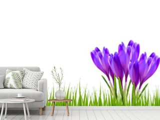 Spring banner with crocus flowers and green grass