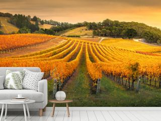 Gorgeous Vineyard in the Adelaide Hills