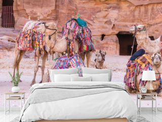 Group of camels in ancient city of Petra in Jordan