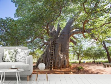 An historic baobab tree remains a tourist attraction in defunct gold-mining areas in the east of South Africa