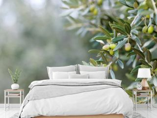 Branch of an olive tree