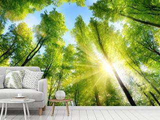 Zauberhafter Sonnenschein auf grünen Baumkronen im Wald