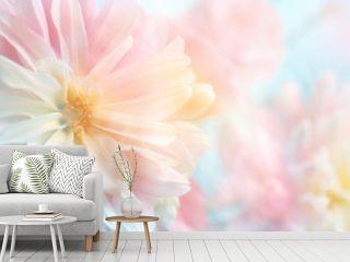 Pink peony flower background