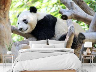 Panda Resting in a Tree