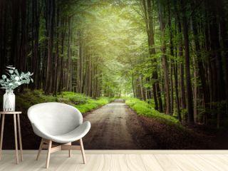 fantasy forest path