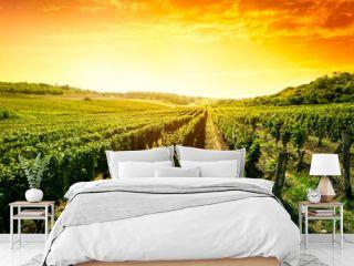 Beautiful sunset over vineyard