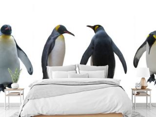 Set imperial penguins on a white background