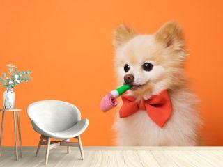 funny litllte dog at orange background