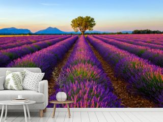 Tree in lavender field at sunrise in Provence, France