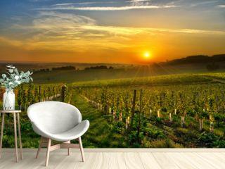 vineyard Bergerac two