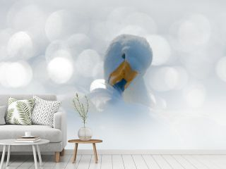 Whooper Swan, Cygnus cygnus, bird portrait with open bill, Lake Kusharo, other blurred swan in the background, winter scene with snow, Japan. Light in the background. Art view of swan.