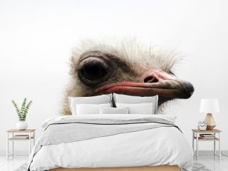 Portrait of the ostrich