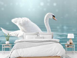 Höckerschwan auf dem See, Cygnus olor