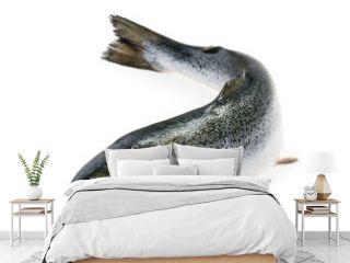 Salmon fish isolated on white