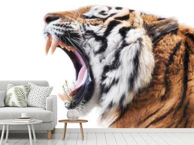 Tiger fury