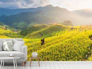 Farmer in Rice fields on terraced of Vietnam. Rice fields prepare the harvest at Northwest Vietnam.Vietnam landscapes.