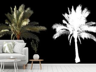 Blowing on the wind beautiful green full size real tropical palm trees isolated on alpha channel with black and white luminance matte, perfect for film, digital composition.