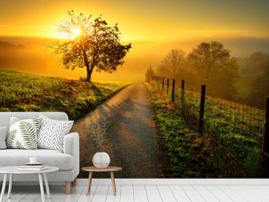 Idyllische Landschaft bei Sonnenaufgang, mit Weg und Baum auf der Wiese