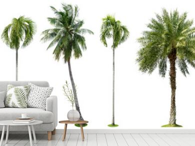 Palm trees isolated collection on white background