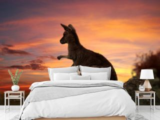 Sunset Kangaroo Australia