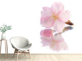 Japanese cherry blossom on reflection white  2