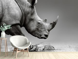 Rhino close up while mobile in Pilanesberg National Park. Fine art, monochrome. Rhinocerotidae