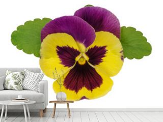 Pansy flower head green leaves isolated white background