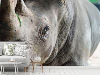 close up rhino