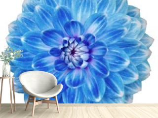 Close-up of single blooming blue dahlia flower isolated on white background