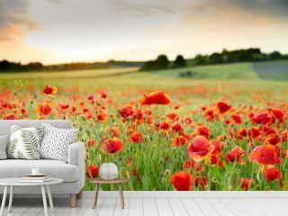 Wonderfull Close up of poppy field