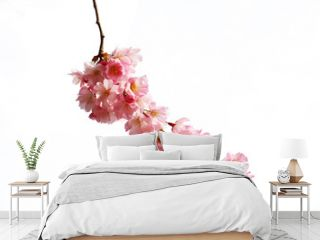 Beautiful pink cherry blossom on a white background