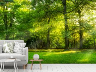 Grünes Wald Panorama im Sommer