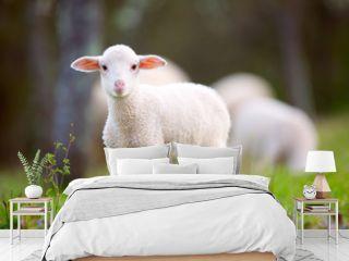 Lamb grazing on green grass meadow