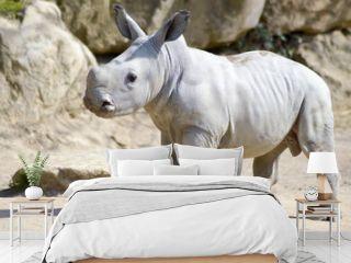 Small rhinoceros on a rock background