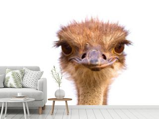 Funny and strange ostrich looks into the frame with surprise. The head of an ostrich peeping out from behind a fence
