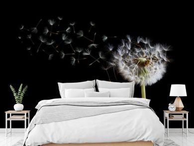 Dandelion seeds in the wind on black background