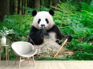 Nice Panda sitting at the rainforest