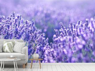 close up shot of lavender flowers