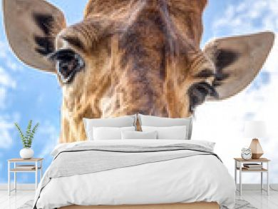 Close-up of a giraffe head