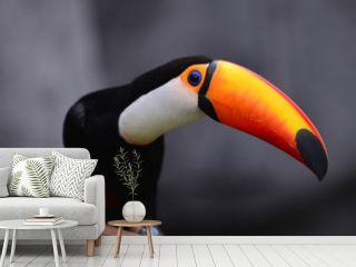 parrot, birds, animals, cute, small, pet, cute animals, hornbill