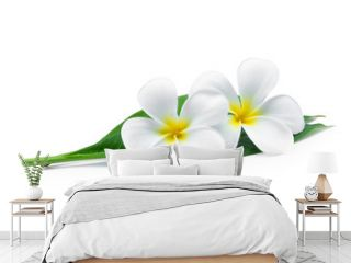 white frangipani or plumeria (tropical flowers) with green leaves isolated on white background