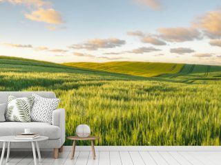 Green, spring field, panorama