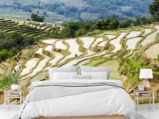 Yuanyang Rice Terraces, Yunnan - China. Terraced rice fields of Hani ethnic people in Yunnan province, China.