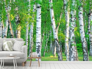 birch grove in the early morning sunlight