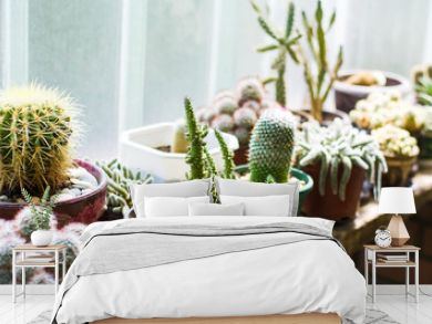 Potted cactus plants next to  big window