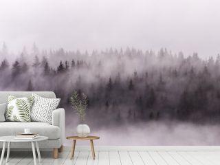 Foggy Landscape. Misty morning view in wet mountain area.