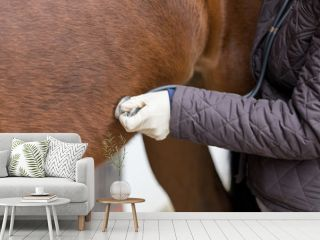 vet at work with stethoscope at a horse