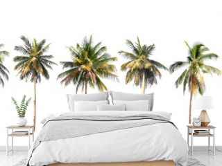 Coconut palm tree on white isolated